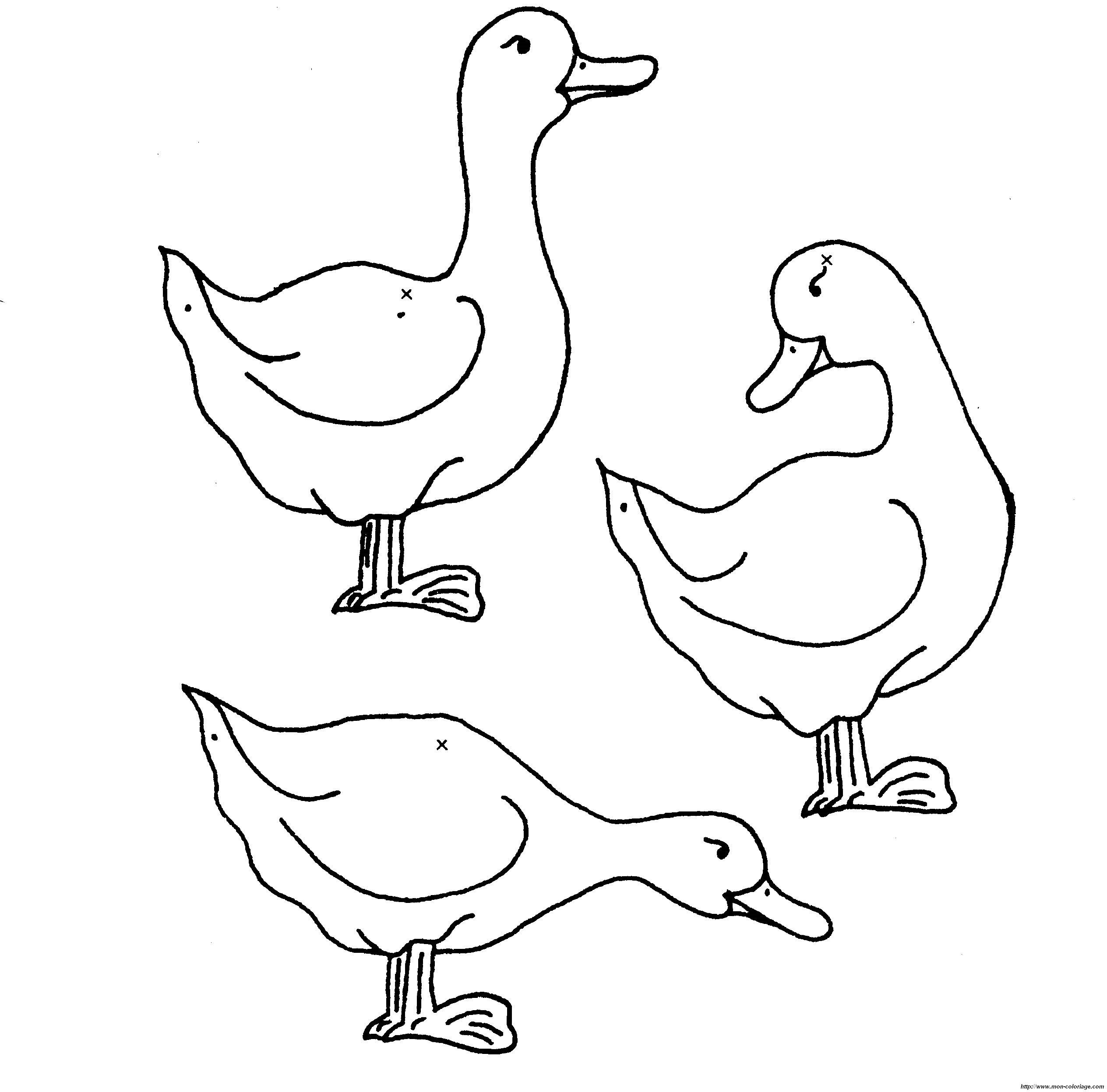 Coloriage de Canard, dessin canards 019 à colorier