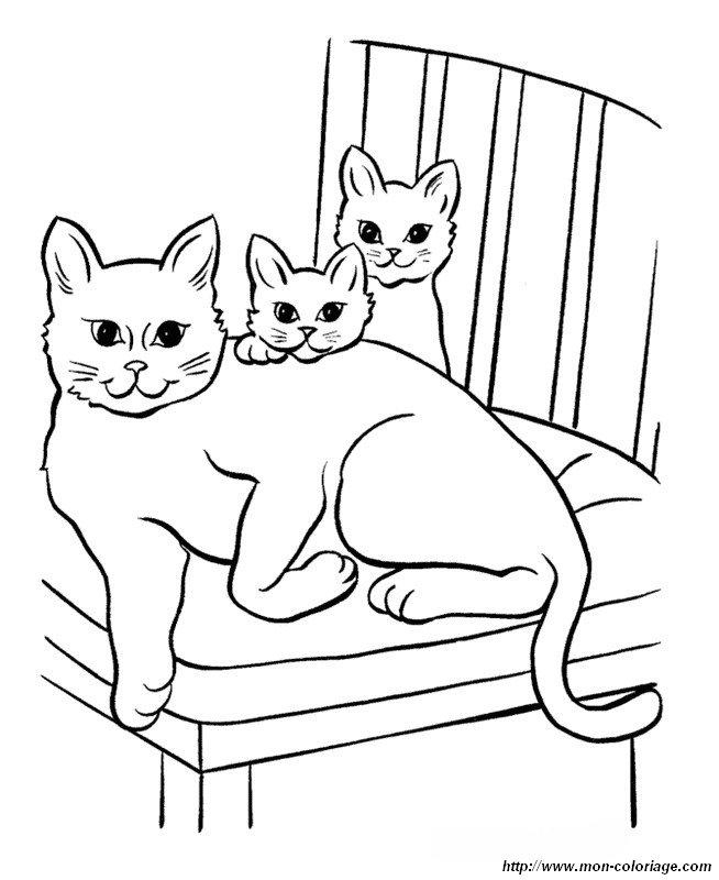 une chatte et ses petits