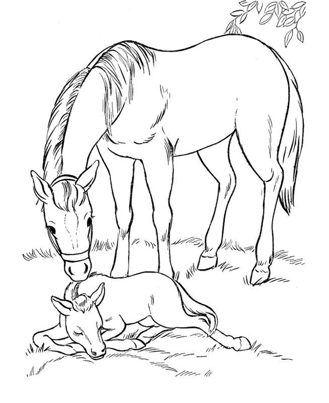Coloriage de cheval dessin la maman surveille son petit poulain colorier - Dessin de poulain a imprimer ...
