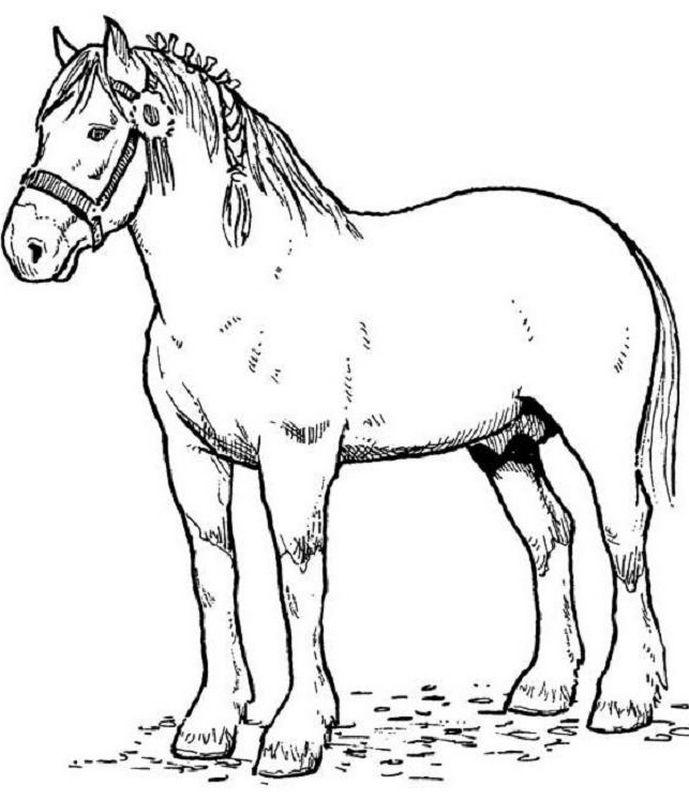 Coloriage de cheval dessin un beau cheval de trait colorier - Dessin cheval de trait ...