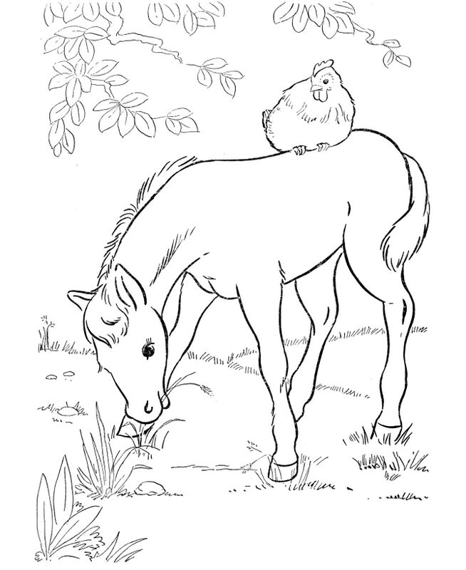 Coloriage de cheval dessin un poulain avec une poule dessus colorier - Dessin de paques facile a faire ...
