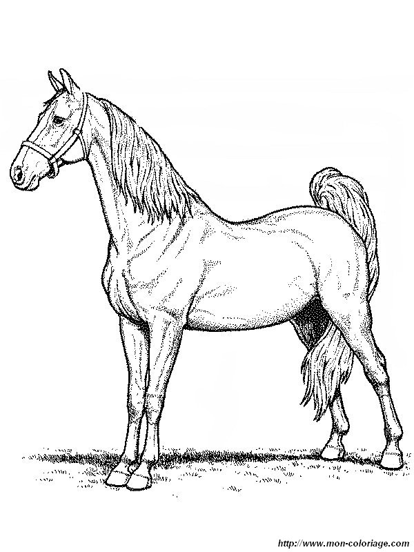 Coloriage de cheval dessin un cheval vraiment magnifique - Dessin de cheval magnifique ...