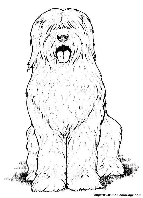 Coloriage de chien dessin il est tout poilu ce chien - Dessin de poilu ...