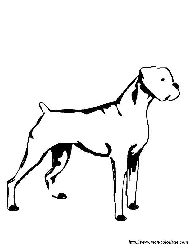 Coloriage de chien dessin un boxer colorier - Coloriage de chien boxer ...