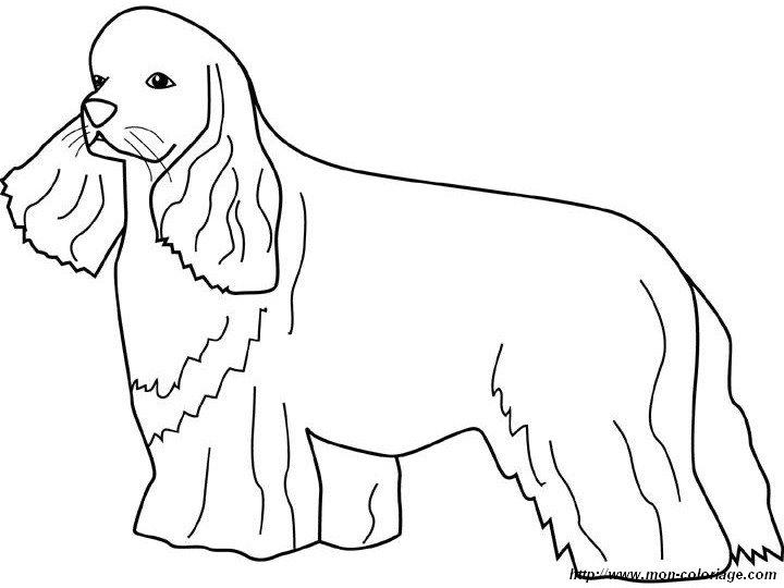 Coloriage de chien dessin un cocker aux grandes oreilles - Dessin de cocker ...