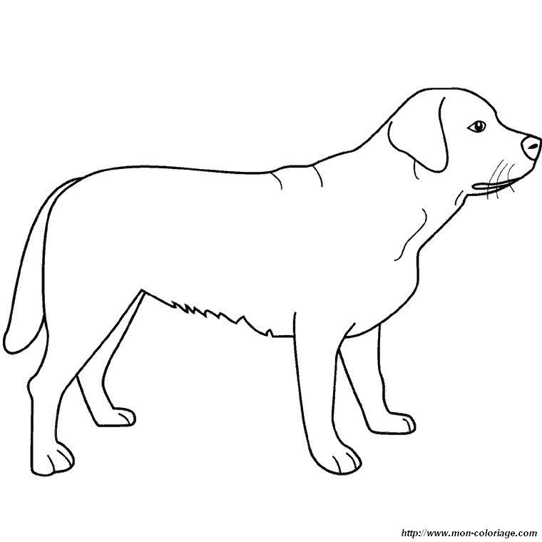 coloriage de chien dessin un labrador debout à colorier