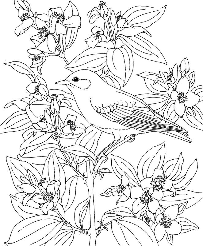 difficult bird coloring pages - photo #25