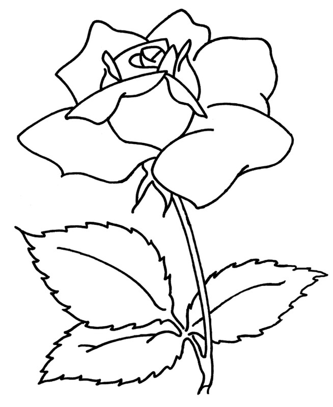 coloriage de fleur, dessin une jolie rose à colorier