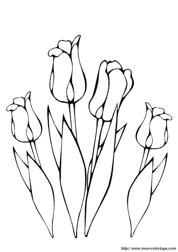 Coloriage de fleur dessin coloriage fleur tulipe jpg colorier - Coloriage fleur tulipe ...