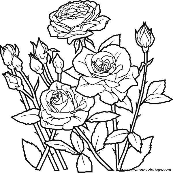 Coloriage De Fleur Dessin Coloriages Fleur Roses Jpg A Colorier