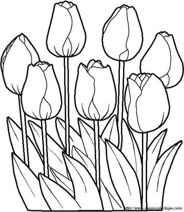 Coloriage de Fleur, dessin coloriages fleur tulipes jpg à ...