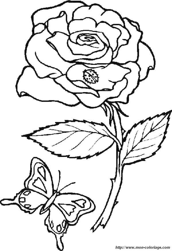 coloriage de fleur dessin coloriages papillons fleur jpg colorier. Black Bedroom Furniture Sets. Home Design Ideas