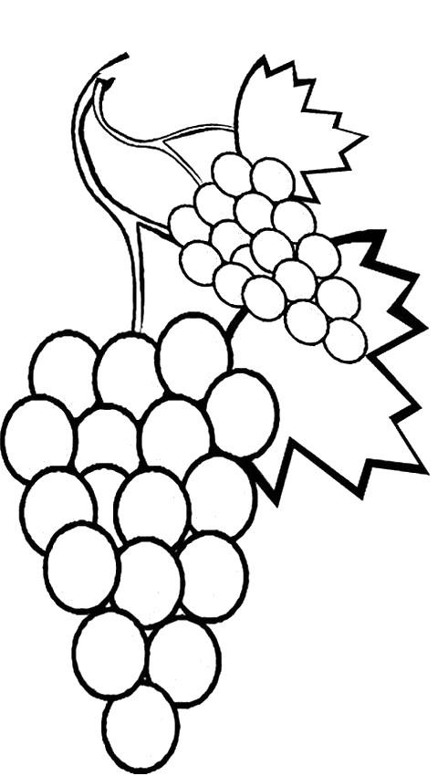 Coloriage de fruits dessin raisin et feuilles de vigne colorier - Feuille de vigne dessin ...