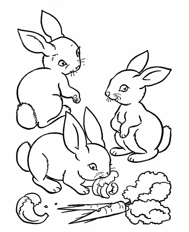 coloriage de lapin, dessin trois jolis petits lapins à
