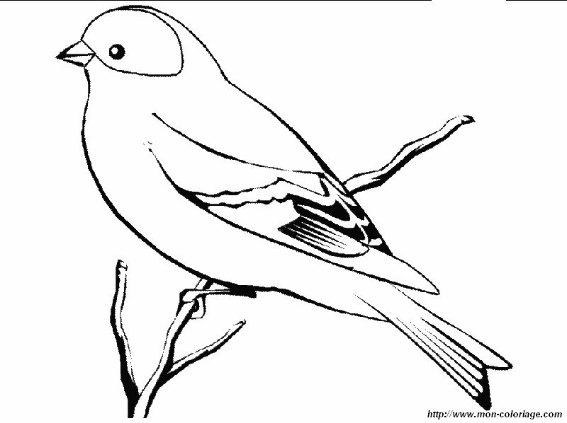 Coloriage de oiseau dessin chardonneret colorier - Dessin d oiseau ...