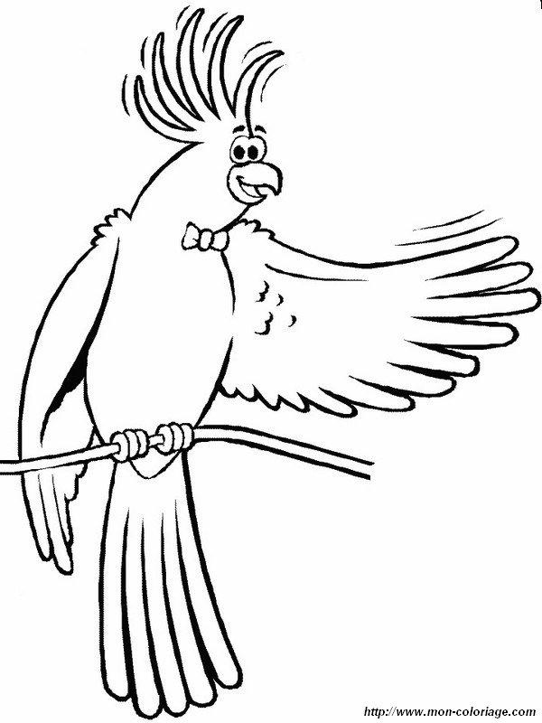 Coloriage de oiseau dessin un cacatoes nous dit bonjour colorier - Perroquet a colorier ...