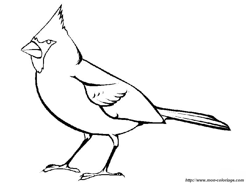 cardinal coloring pages preschool free - photo#46
