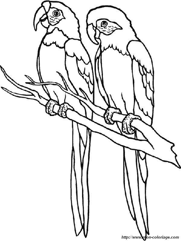 Coloriage de oiseau dessin un couple de perroquet colorier - Dessins de perroquets ...