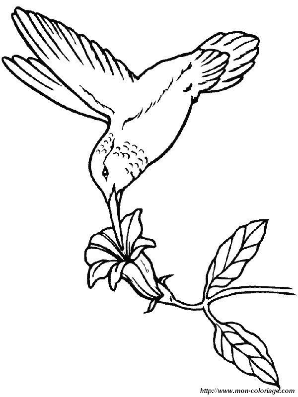 Dessin Oiseau Mouche coloriage de oiseau, dessin un oiseau mouche à colorier