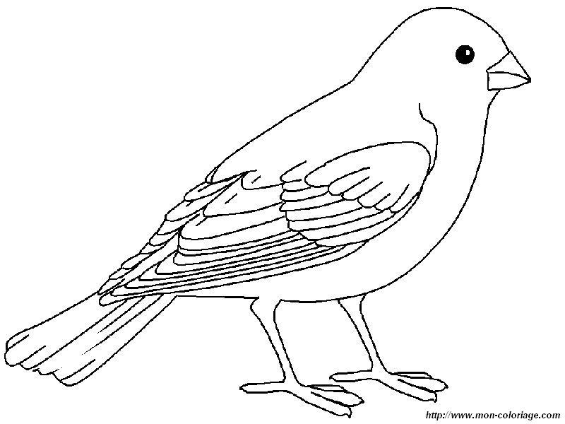 Coloriage de oiseau dessin un ortolan c est delicieux - Un oiseau dessin ...