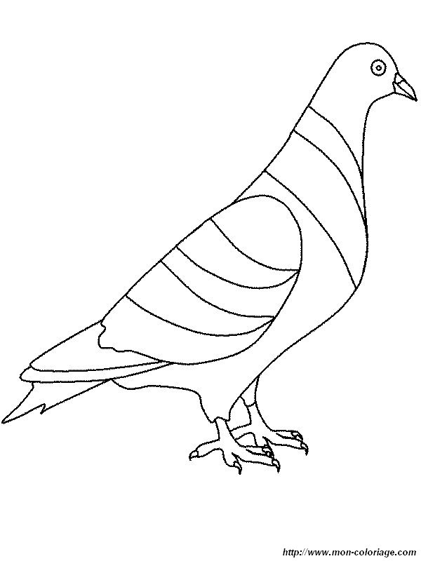 Coloriage de oiseau dessin un pigeon colorier - Dessin pigeon ...