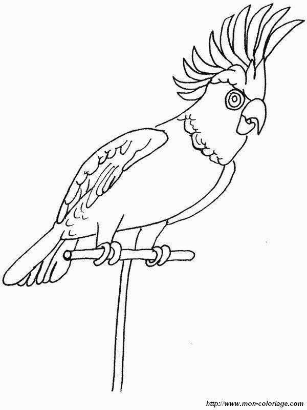 Coloriage de oiseau dessin une perruche tres jolie colorier - Coloriage perruche ...