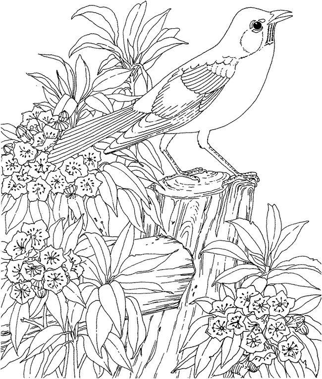 Coloriage De Pour Adultes Dessin Oiseau Sur Un Tronc à Colorier