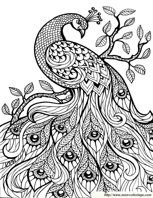 Coloriage de pour adultes dessin un magnifique paon colorier - Coloriage magnifique ...