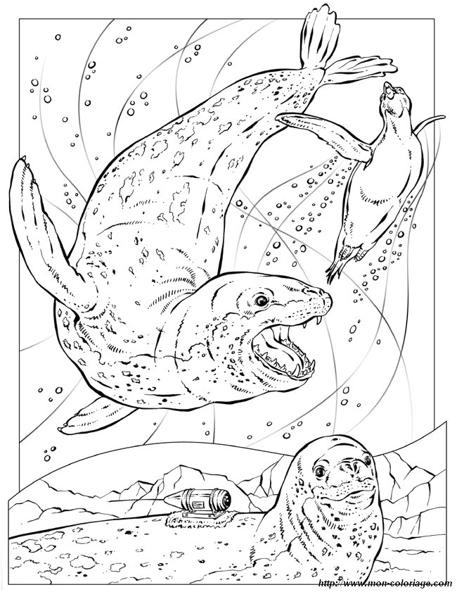 Adult Coloring Pages Seal