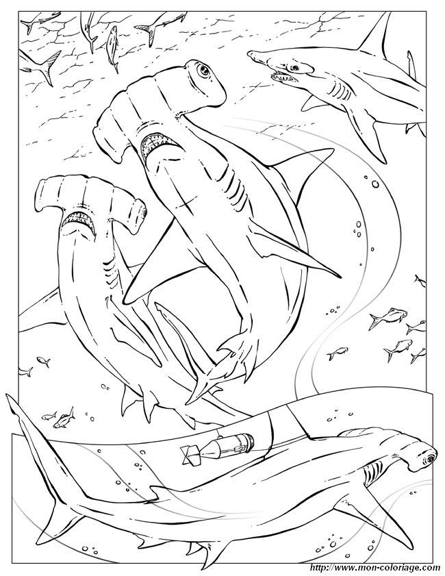 Coloriage de pour enseignants dessin requin marteau for Comment dessiner un requin marteau