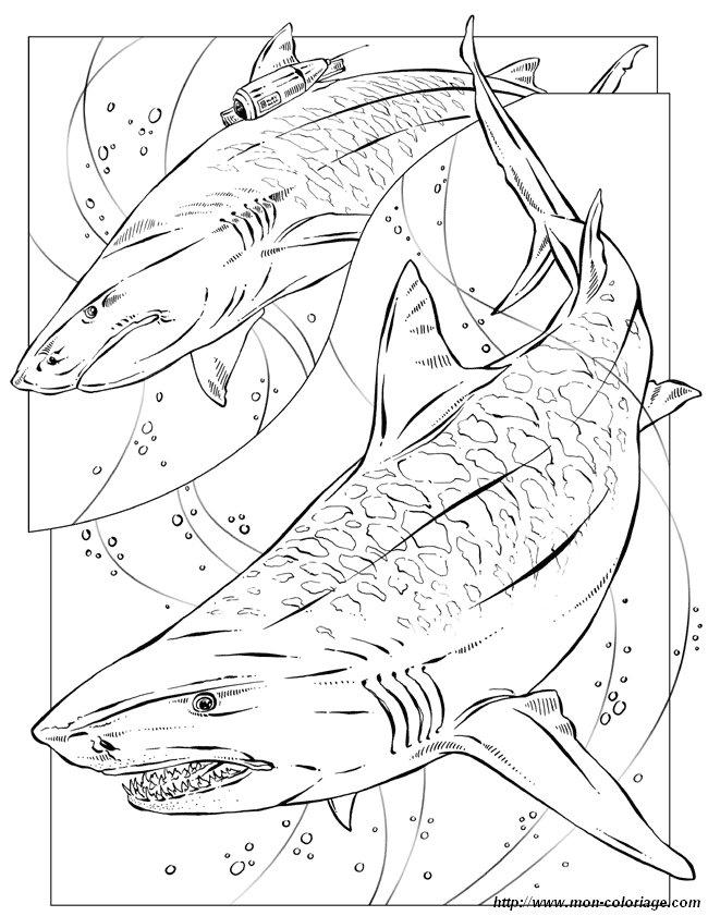 Coloriage De Pour Enseignants Dessin Requin Tigre A Colorier